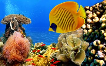 3 Animated Marine Aquarium Wallpapers and Screensavers
