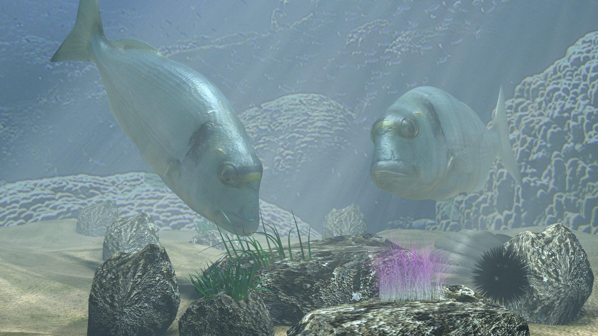 Animal - Fish  Sea Bream 3D Dorade Daurade Mediterranean Underwater Shell Seaweed Ocean Floor Wallpaper