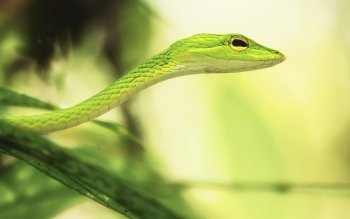 Animal - Grass Snake Wallpapers and Backgrounds ID : 369036