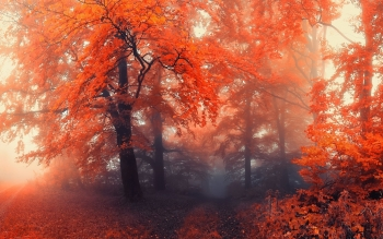 Earth - Autumn Wallpapers and Backgrounds ID : 371476
