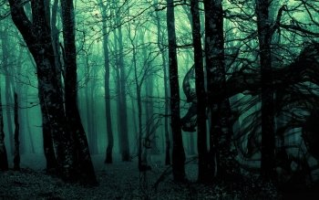 Dark - Forest Wallpapers and Backgrounds ID : 372356