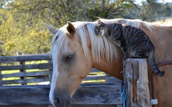 Animaux Pets Cheval Chat Fond d'écran HD | Image