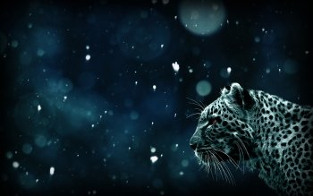 Animal - Leopard Wallpapers and Backgrounds ID : 373232