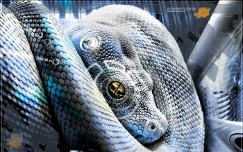 Animal - Snake Wallpapers and Backgrounds ID : 373765