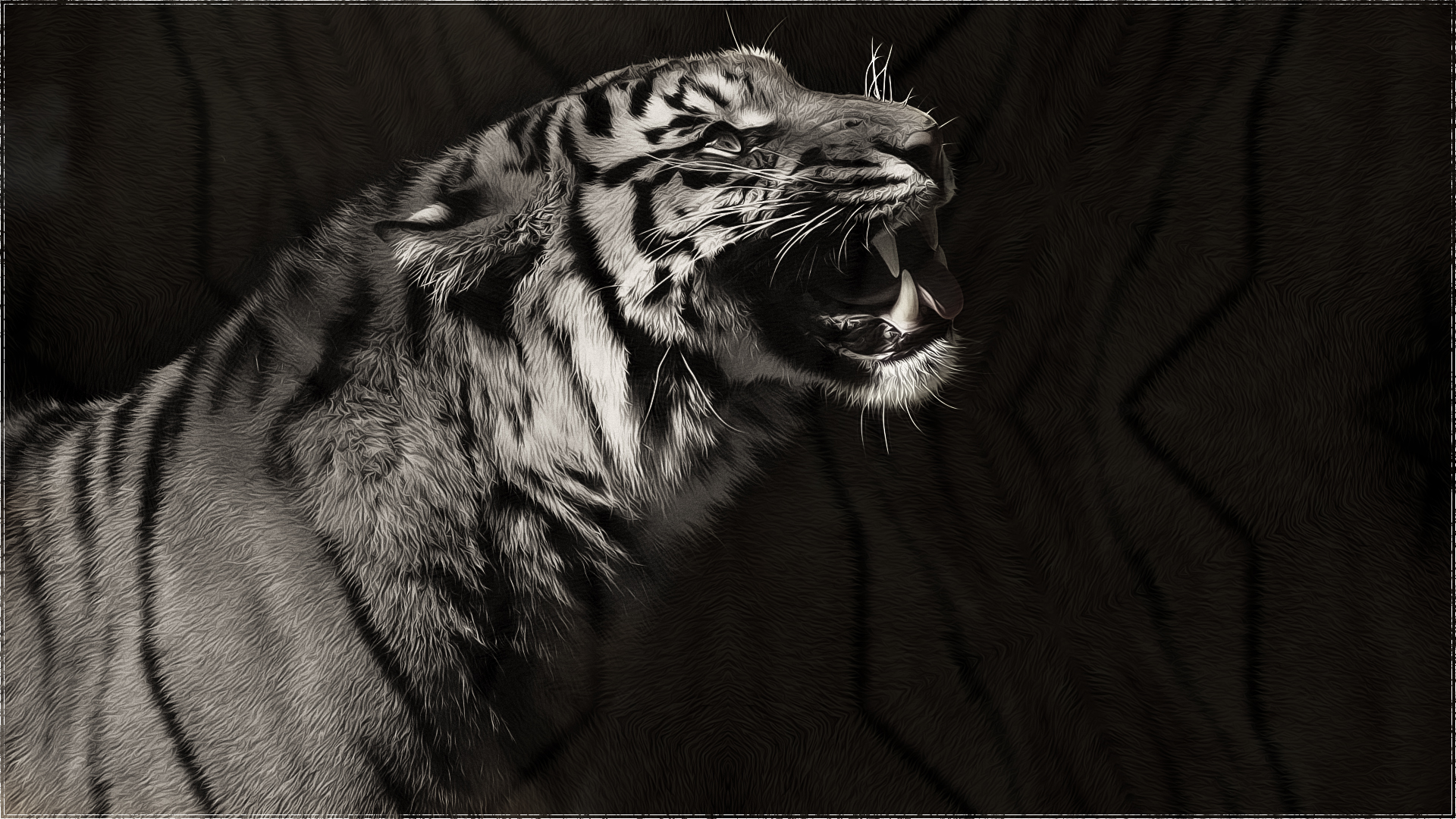 White tiger hd wallpaper background image 1920x1080 - Animal black background wallpaper ...