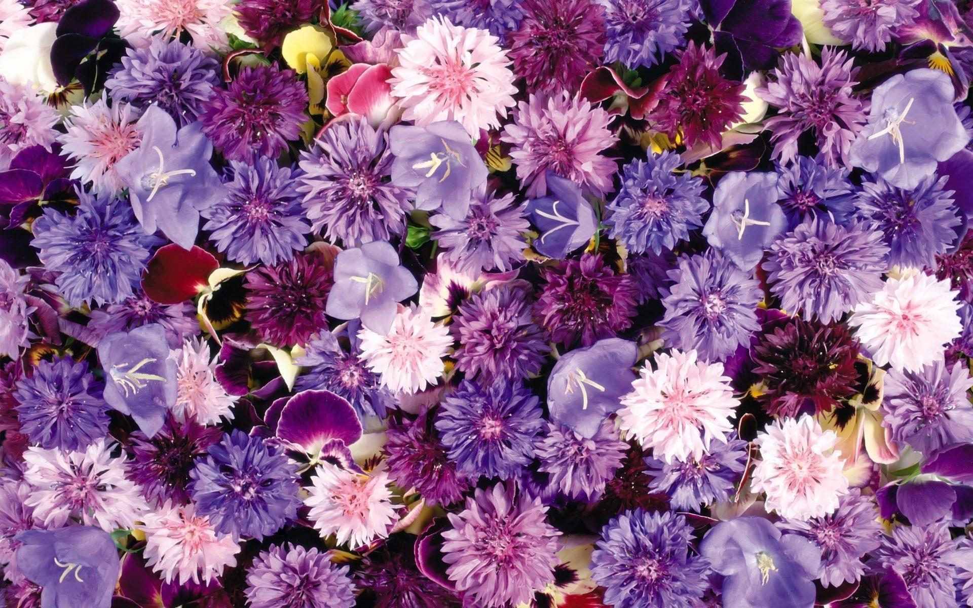 Fiori Wallpaper.Flower Hd Wallpaper Background Image 1920x1200 Id 374934