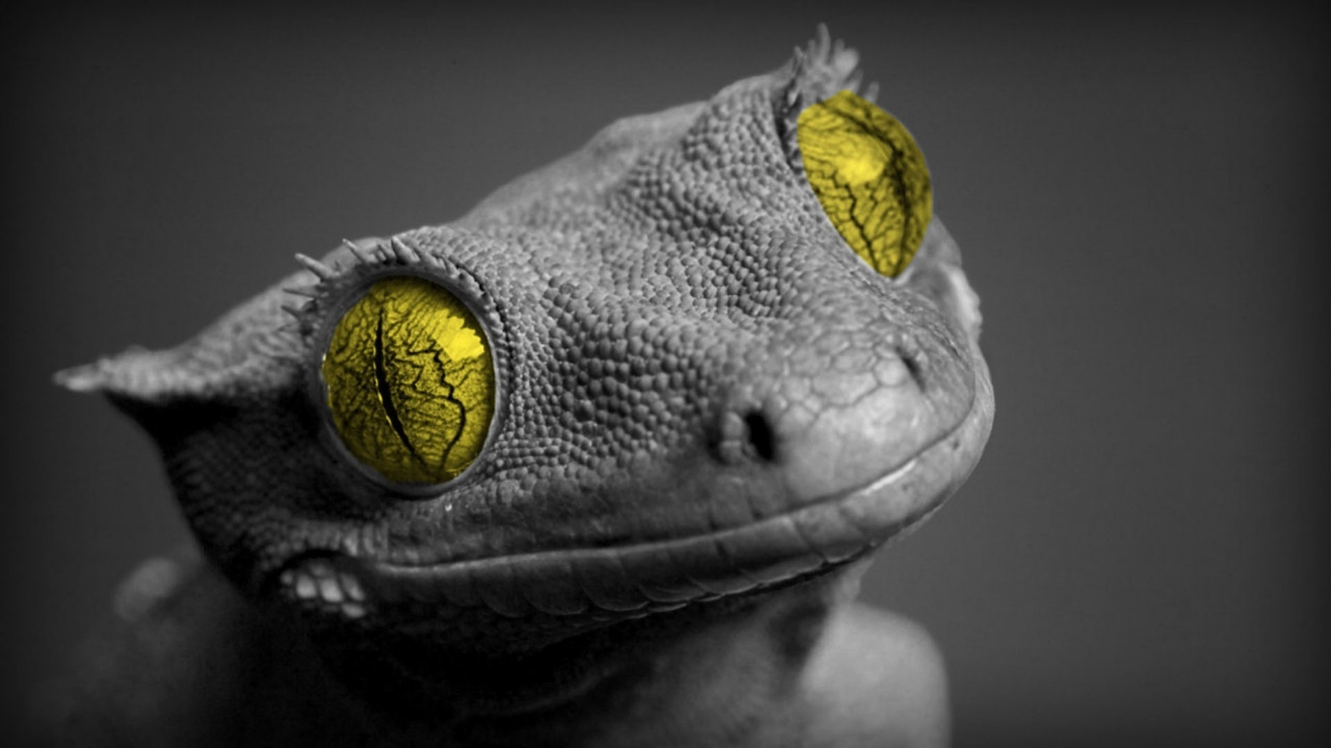 68 gecko hd wallpapers hintergr nde wallpaper abyss for Immagini desktop 1366x768