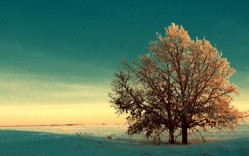 Erde - Baum Wallpapers and Backgrounds ID : 378114