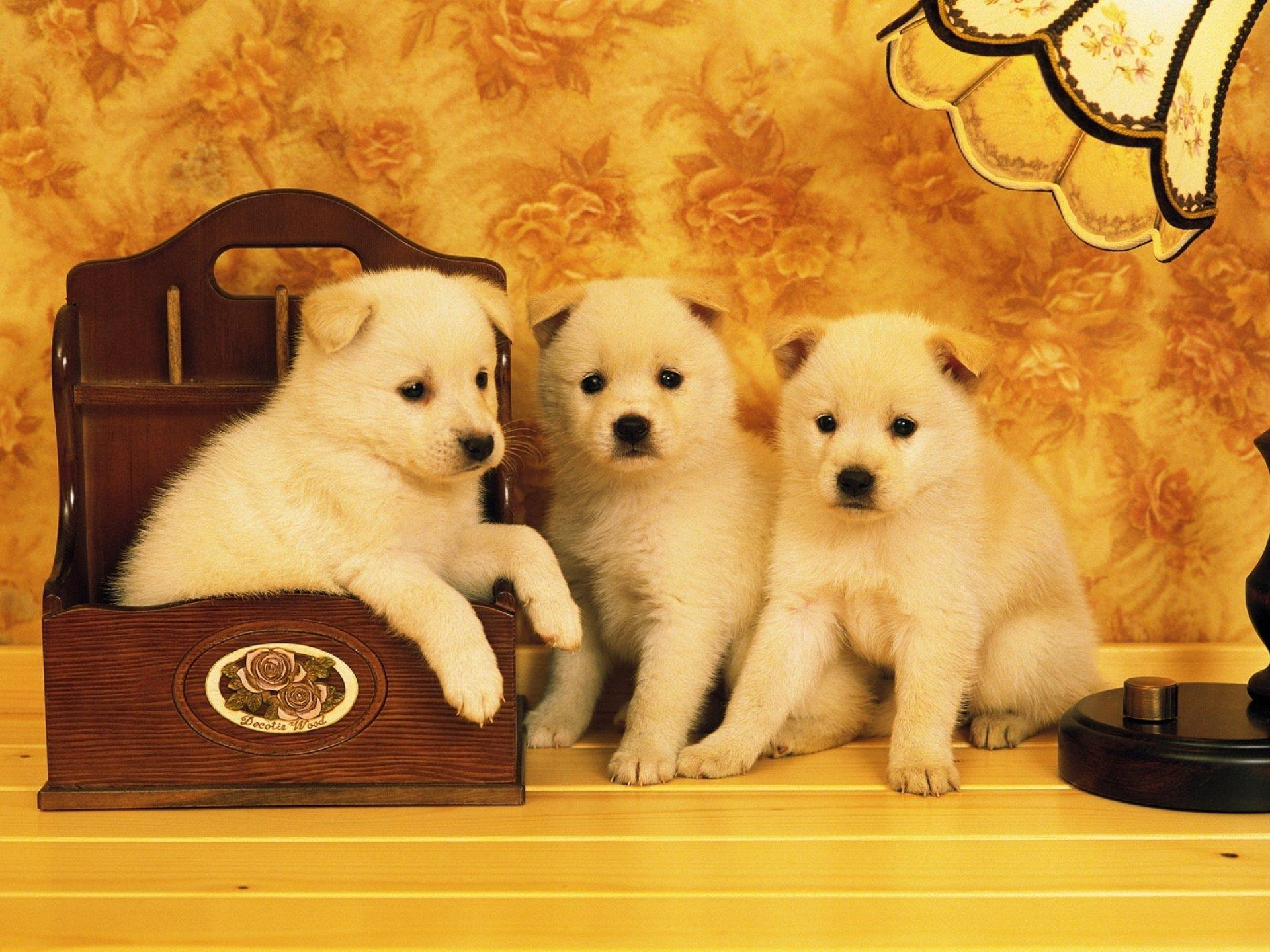 Animal - Dog  Islam Wallpaper