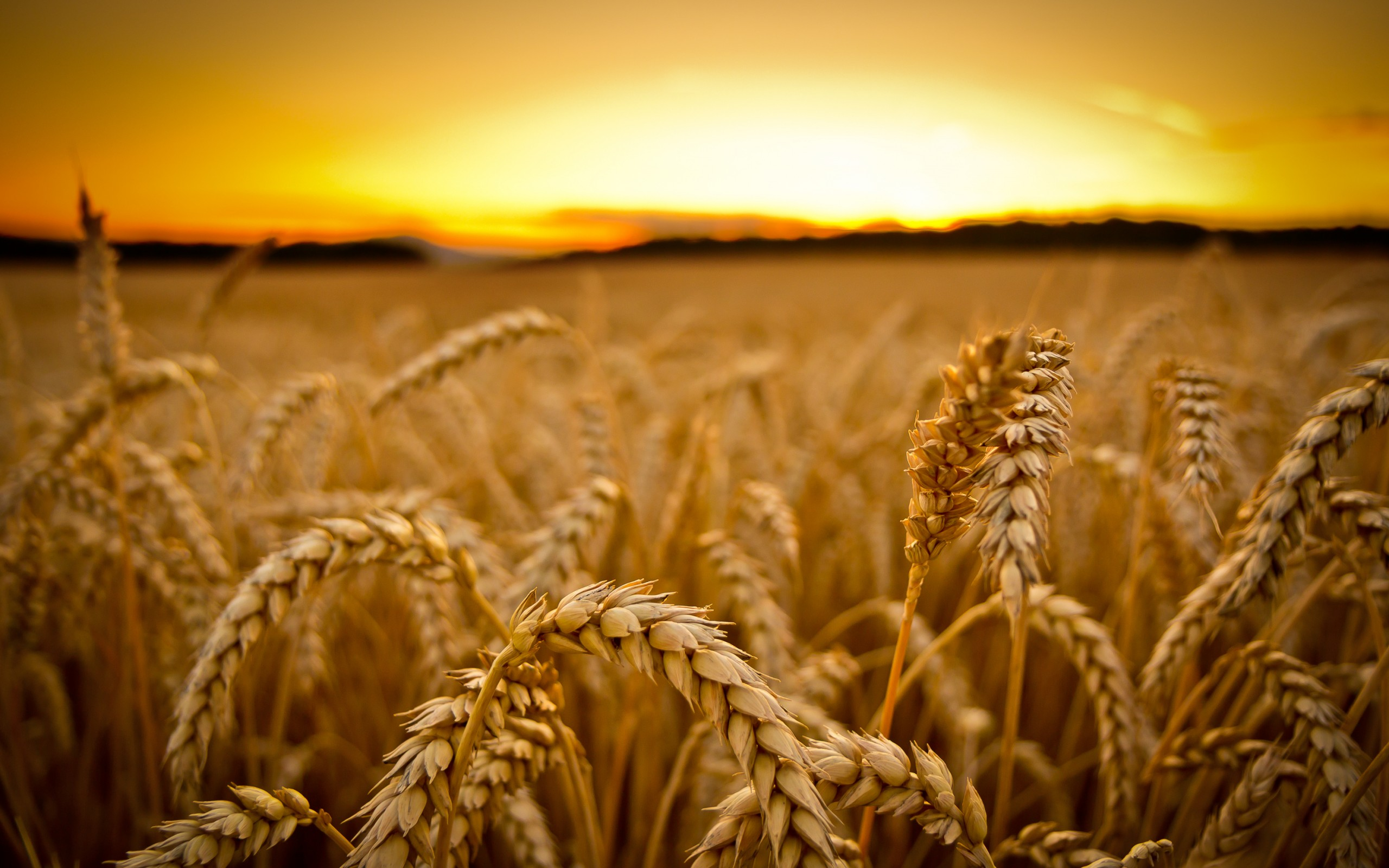 208 Wheat Wallpapers | Wheat Backgrounds Page 3