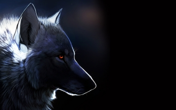 Djur - Wolf Wallpapers and Backgrounds ID : 382673
