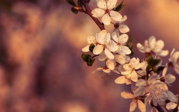 Earth - Blossom Wallpapers and Backgrounds ID : 382977