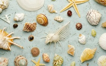 Earth - Shell Wallpapers and Backgrounds ID : 383149