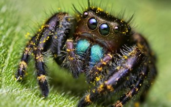 Animal - Spider Wallpapers and Backgrounds ID : 383372