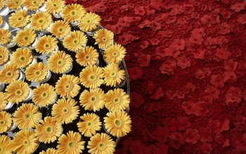 Man Made - Flower Wallpapers and Backgrounds ID : 384337