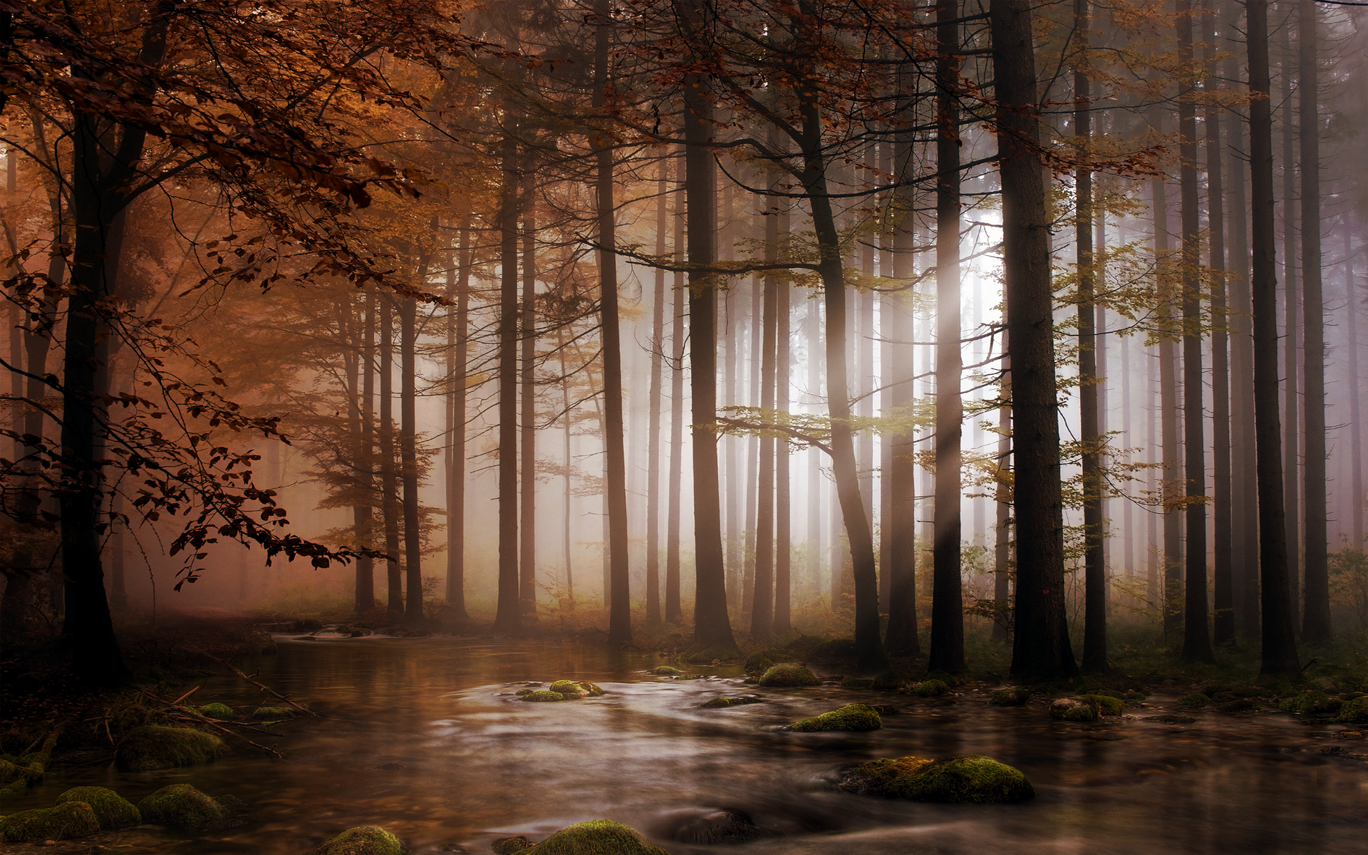Earth - Forest  Wallpaper