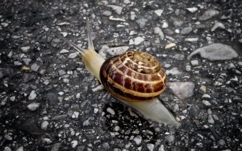 Animal - Snail Wallpapers and Backgrounds ID : 385162