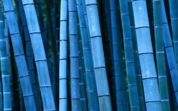 Earth - Bamboo Wallpapers and Backgrounds ID : 387296