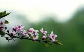 Earth - Blossom Wallpapers and Backgrounds ID : 389928