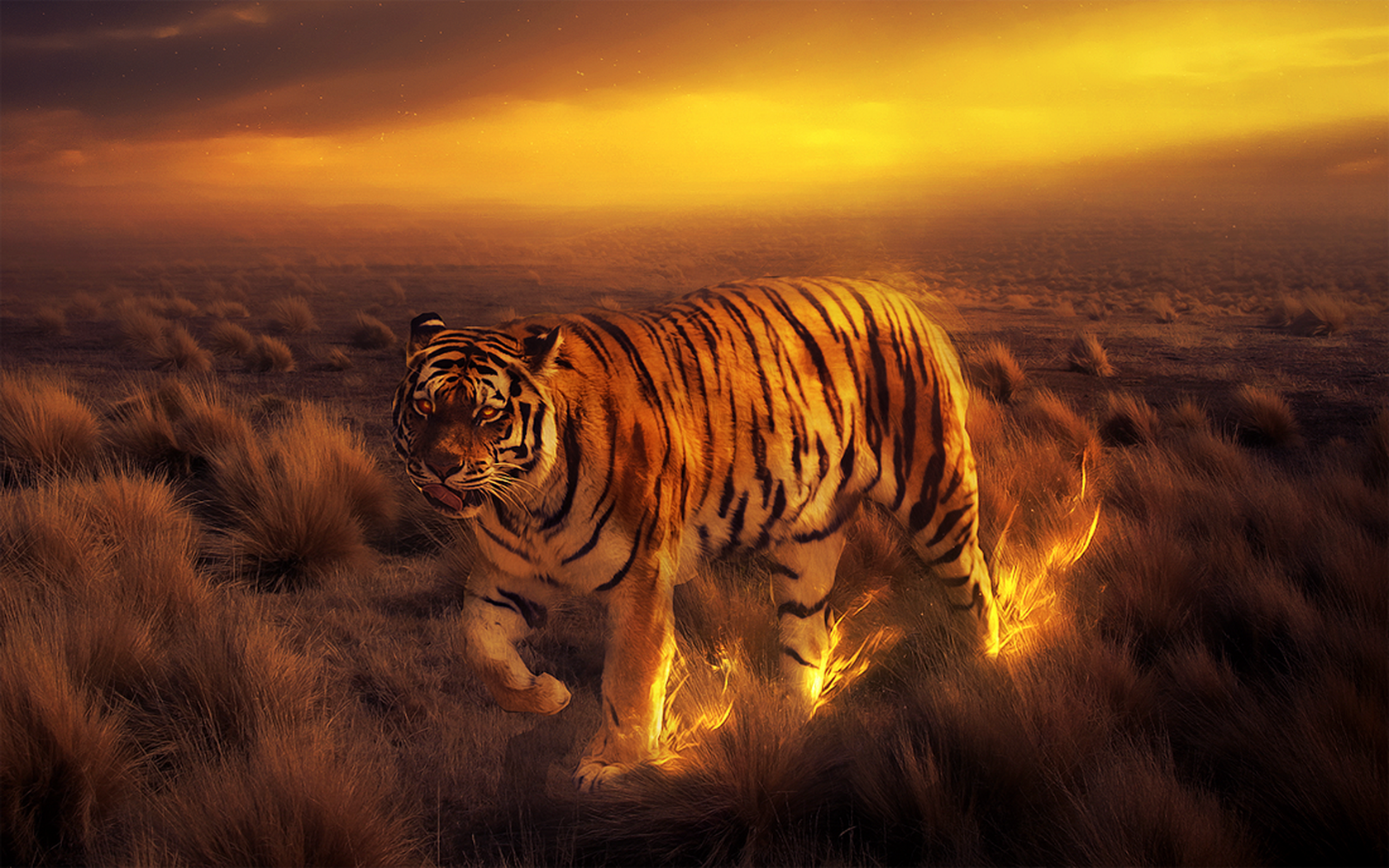 Tiger Wallpaper and Background Image | 1680x1050 | ID:390257