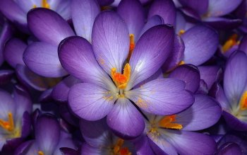 1726 Purple Flower Hd Wallpapers Background Images Wallpaper Abyss