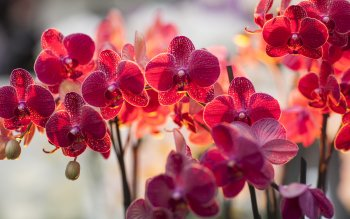 Earth - Orchid Wallpapers and Backgrounds ID : 390310