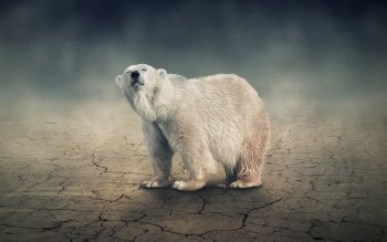 Animal - Polar Bear Wallpapers and Backgrounds ID : 390644