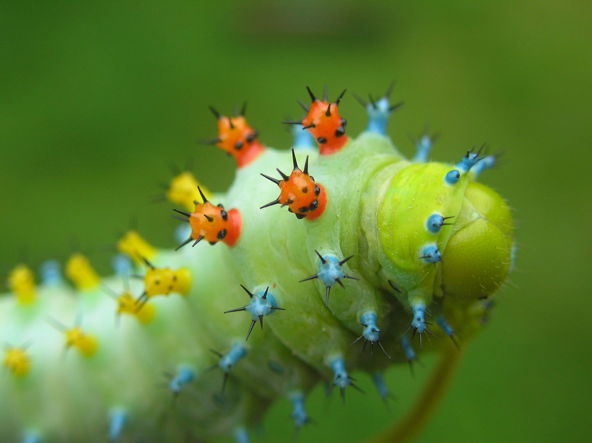 caterpillar wallpaper hd