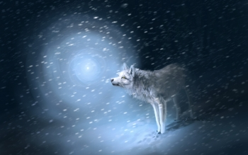 Animal - Wolf Wallpapers and Backgrounds ID : 391448