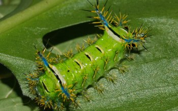 Animalia - Caterpillar Wallpapers and Backgrounds ID : 391545