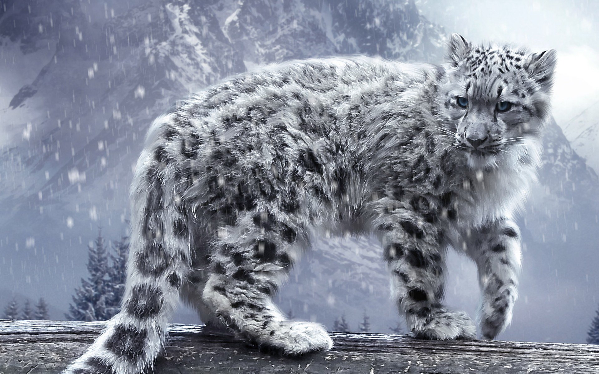 313 snow leopard hd wallpapers | background images - wallpaper abyss