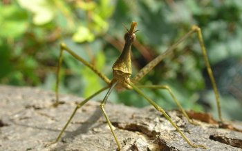 Animal - Horse Head Grasshopper Wallpapers and Backgrounds ID : 393091