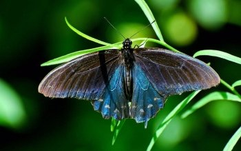 Animal - Butterfly Wallpapers and Backgrounds ID : 393817
