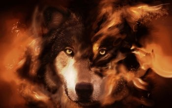 Djur - Wolf Wallpapers and Backgrounds ID : 393936