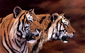 Animal - Tiger Wallpapers and Backgrounds ID : 395638