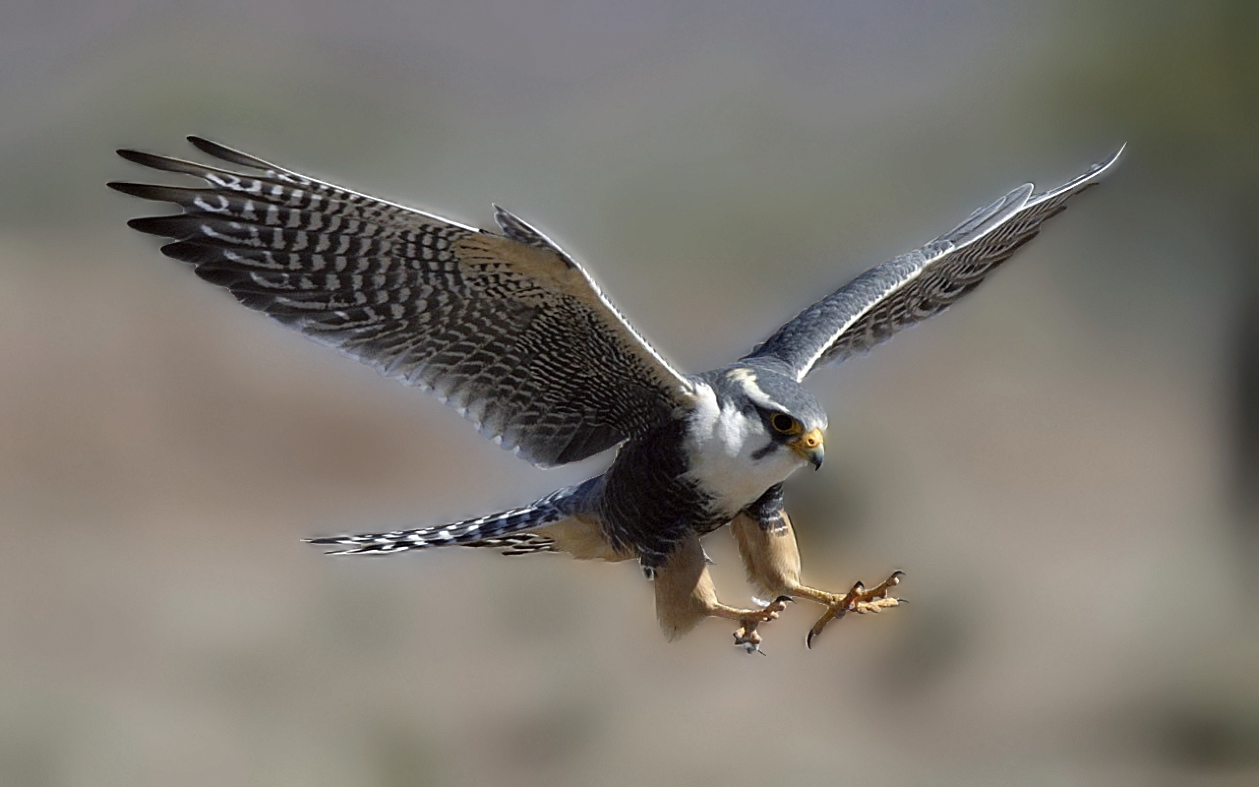 108 Falcon HD Wallpapers | Backgrounds - Wallpaper Abyss ...