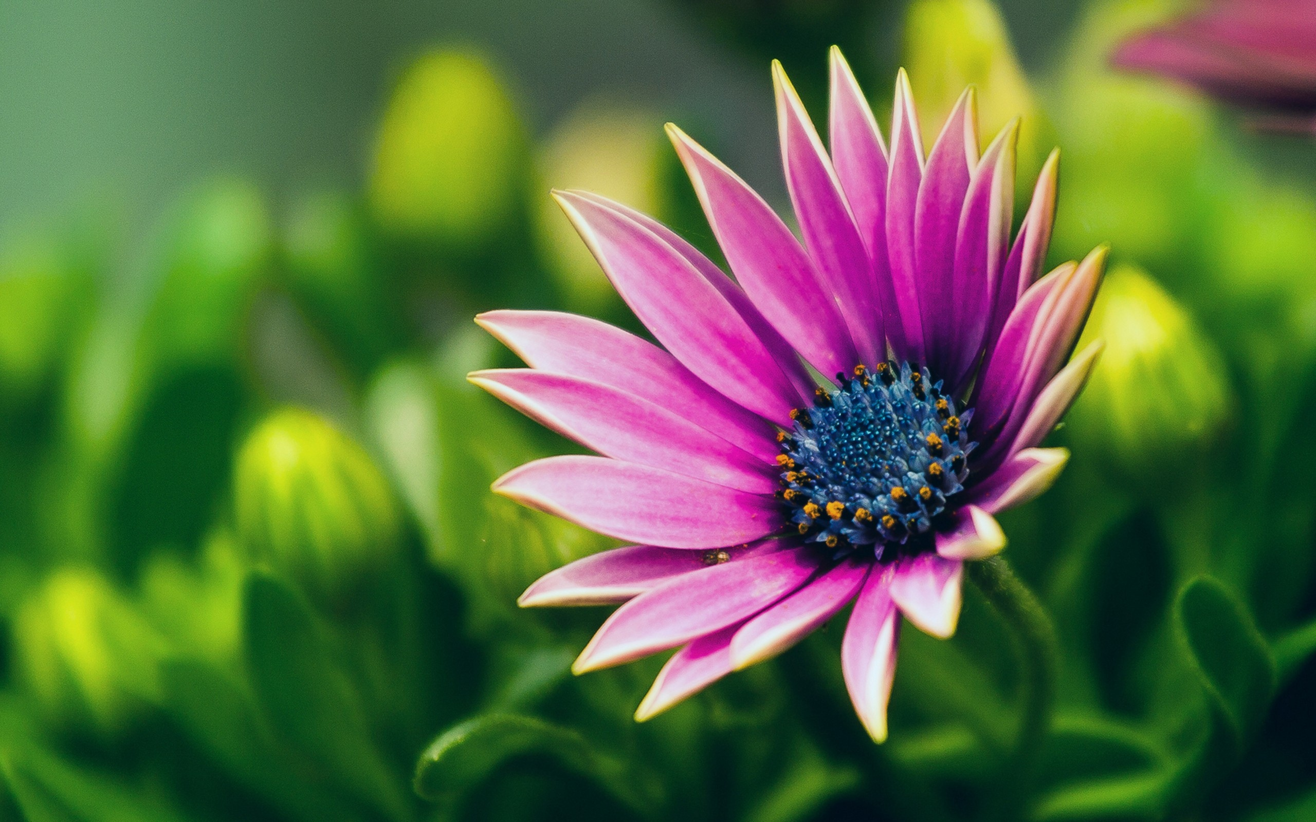 Flower Full HD Wallpaper And Background Image