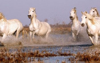 Animal - Horse Wallpapers and Backgrounds ID : 397192