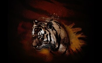 Animalia - Tigre Wallpapers and Backgrounds ID : 397443
