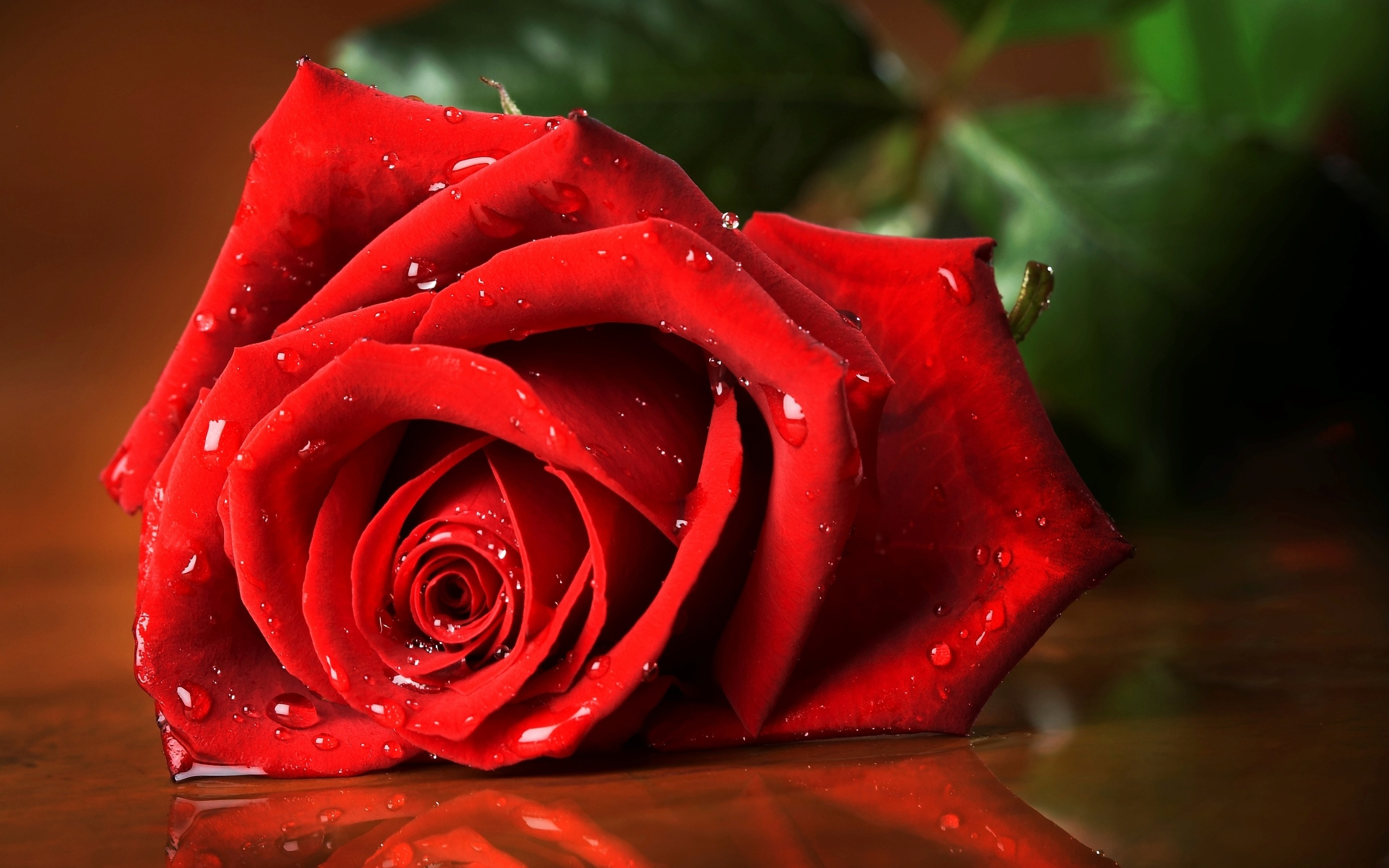 Hd wallpaper rose - Hd Wallpaper Background Id 398157 2560x1600 Earth Rose