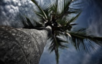 Earth - Palm Wallpapers and Backgrounds ID : 398582