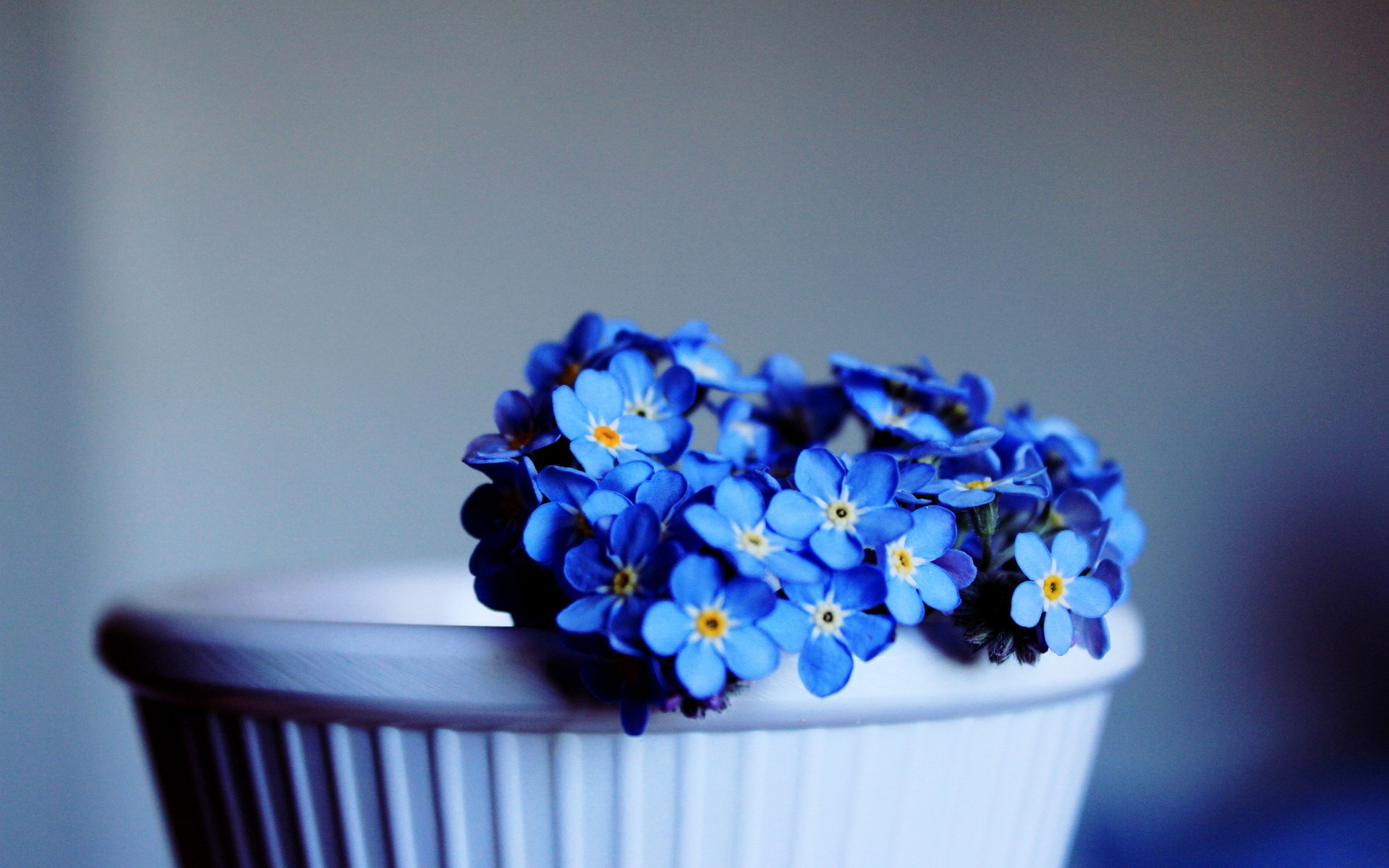 352 blue flower hd wallpapers | background images - wallpaper abyss