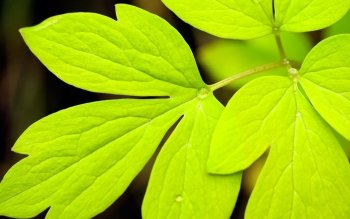 Earth - Leaf Wallpapers and Backgrounds ID : 399493