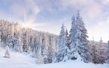 Earth - Winter Wallpapers and Backgrounds ID : 399706