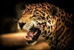 Preview Animals: KokoHungary