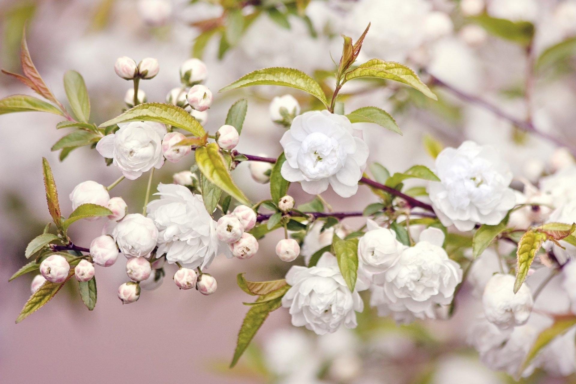 Earth - Blossom  Wallpaper