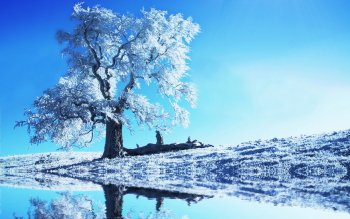 Earth - Winter Wallpapers and Backgrounds ID : 400434