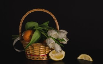 Photography - Still Life Wallpapers and Backgrounds ID : 401704