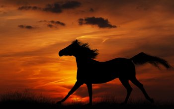 Animal - Horse Wallpapers and Backgrounds ID : 404290