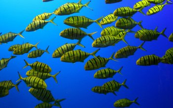 Animal - Fish Wallpapers and Backgrounds ID : 404918